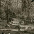 Veduta del bosco di Camaldoli